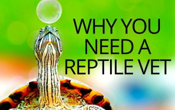 Why You Need A Reptile Vet