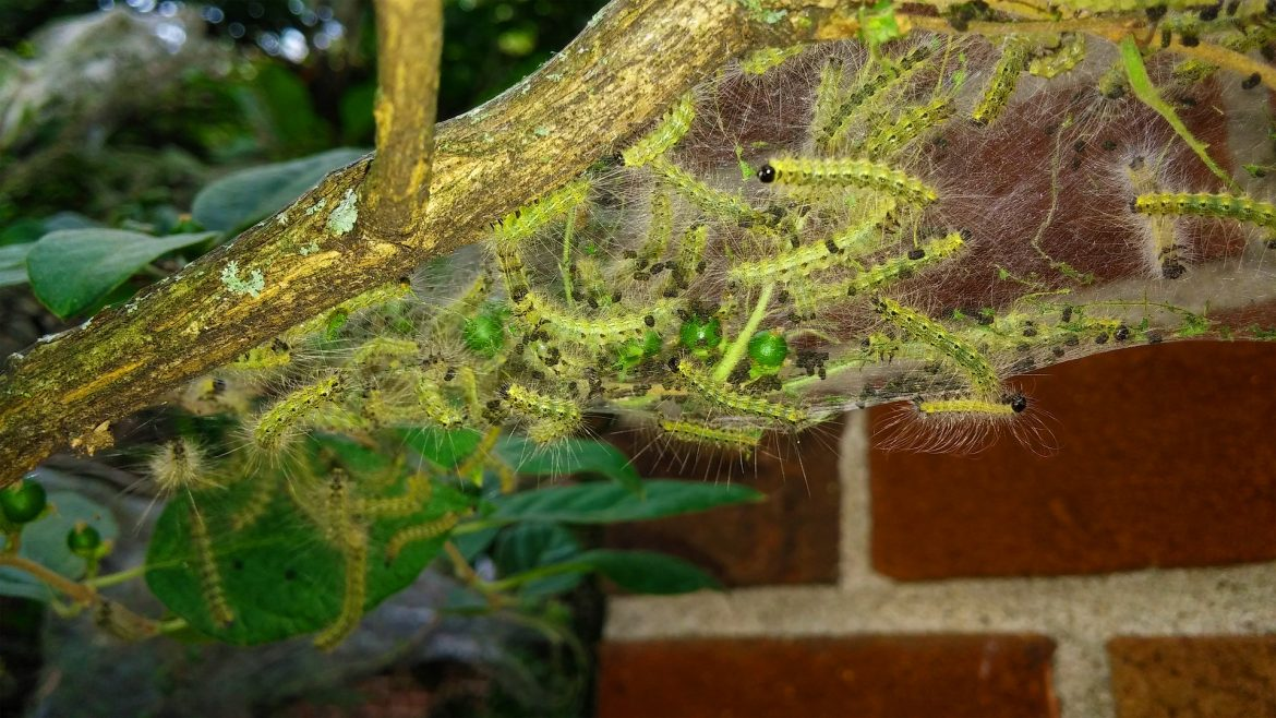 The 5 Absolute Worst Pest Infestations